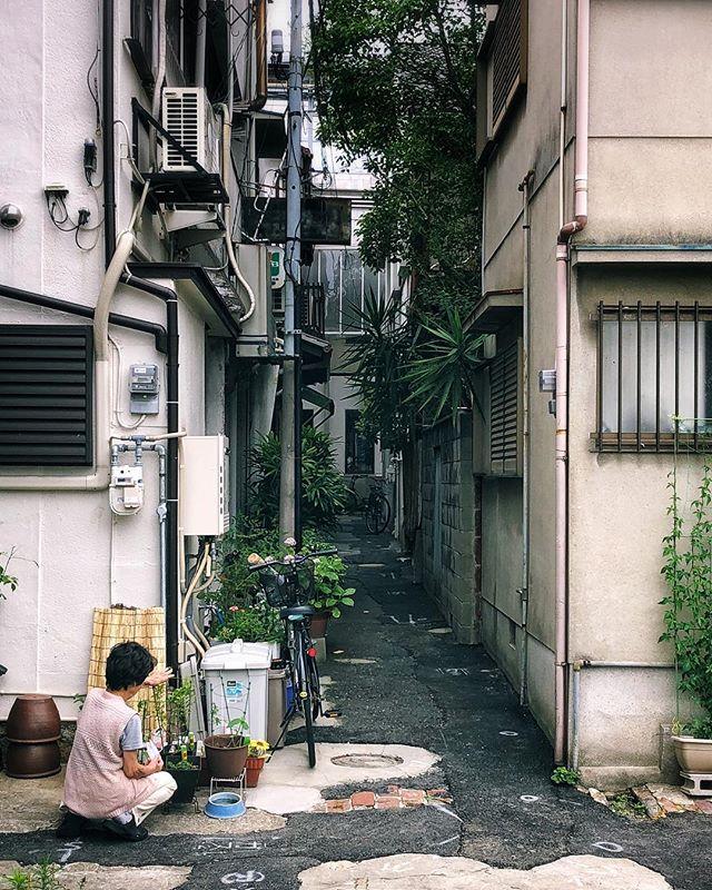 Les choses simples  #osakasafari #japonsafari