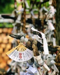 Petite chance #japonsafari #osakasafari