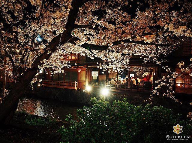 Premium Hanami #japon #kyoto