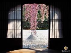 Un nouveau point de vue #japon #kyoto