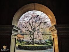Harmonie #japon #kyoto