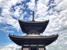 420 ans après, rien n'a changé  #osakasafari #japonsafari