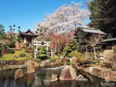 A l'heure actuelle, ce jardin est incontestablement ma plus belle découverte de l'année !! #japon #kyoto