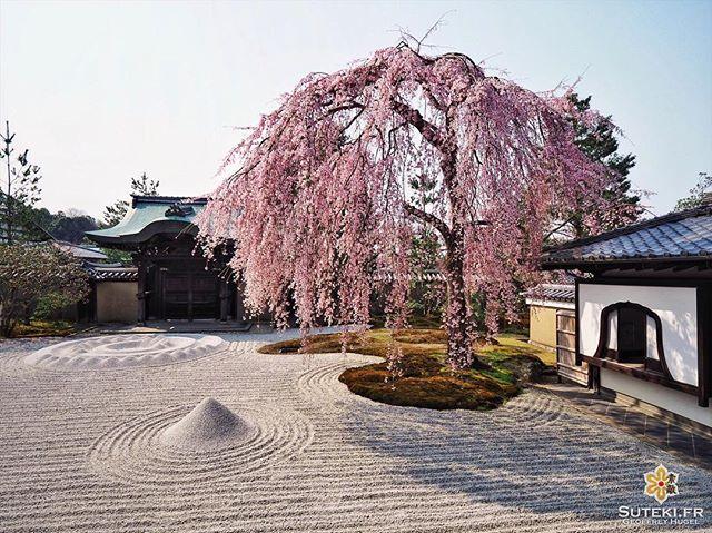 Simplement majestueux #japon #kyoto