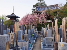 Un bel endroit pour trouver le repos #japon #kyoto