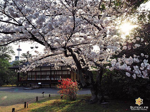 Où que vous soyez, la tour de Kyoto est toujours là, quelque part dans un coin #japon #kyoto