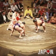 Combat de titans !😱 #sumo #ryogoku #japon