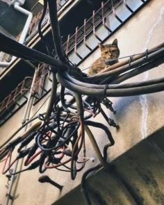 J'ai enfin trouvé l'inspecteur des normes électriques au Japon !