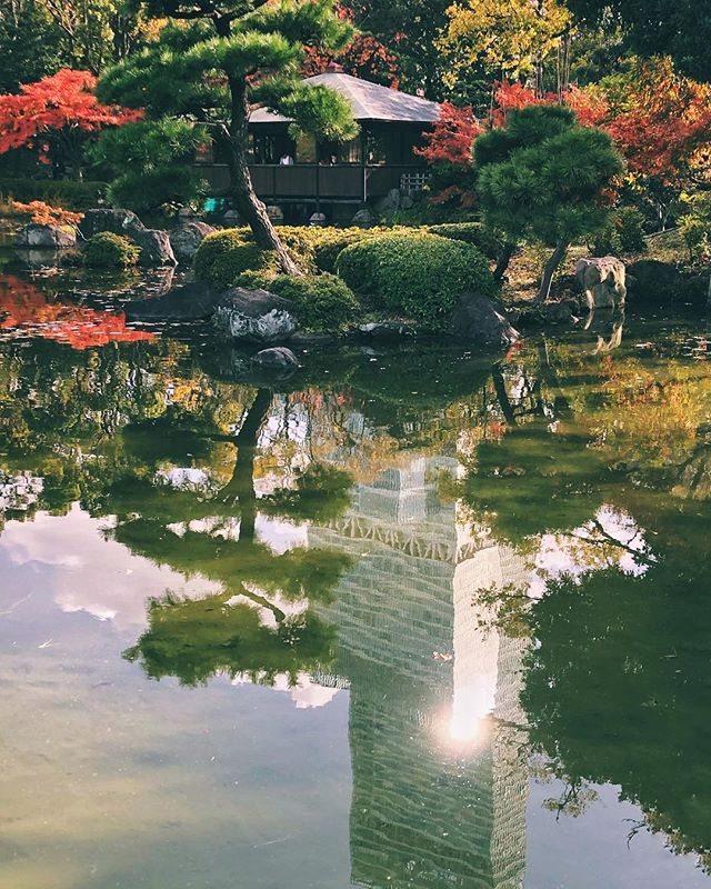 Un peu d'automne à Osaka quand même :) #osakasafari #japonsafari