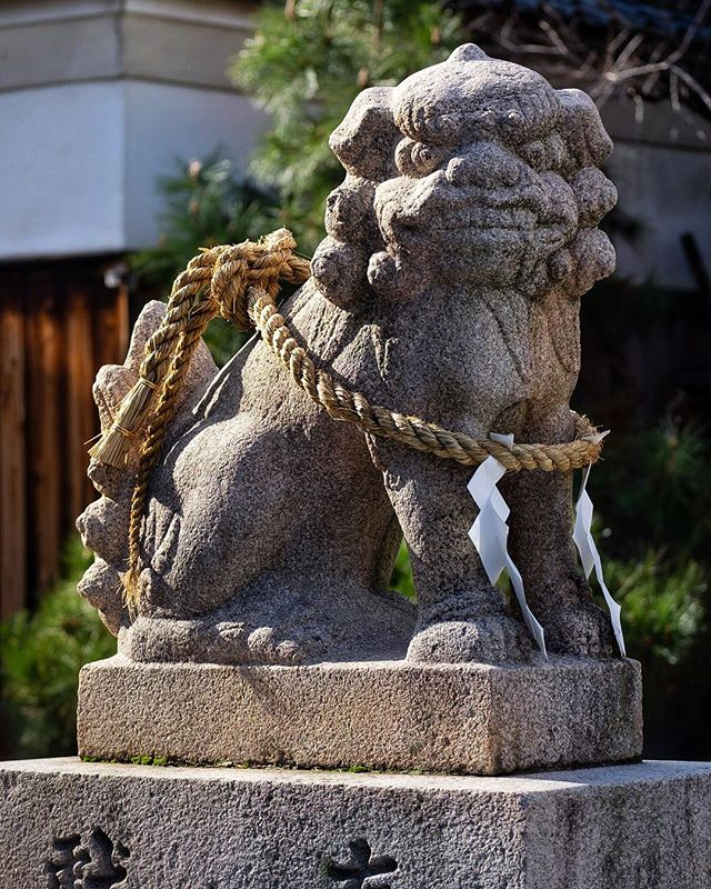 Le protecteur encordé #osakasafari #japonsafari  #osaka #osakatravel #osakacameraclub #大阪観光 #explorejpn