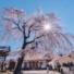 Denrée rare au Japon : les espaces vides. Merci Nara !