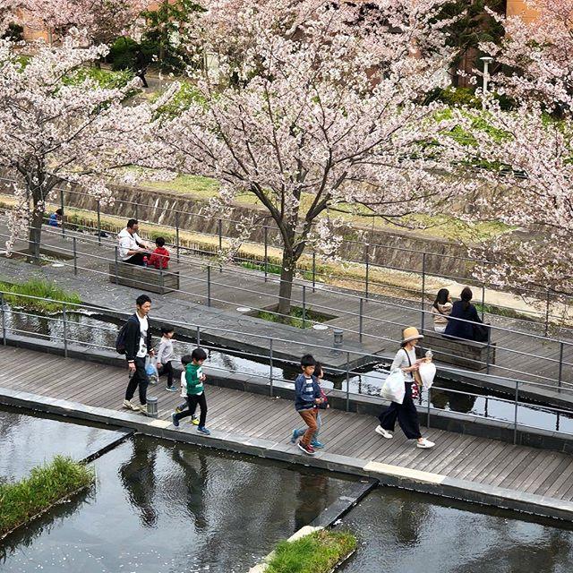 Les cerisiers ont fleuris assez tôt mais avec le coup de froid tout de suite après on a eu des éclosions assez disparates. Finalement ça a duré longtemps cette année. Être le 13 avril et pouvoir encore profiter de ça à Osaka c'est un peu étonnant :)