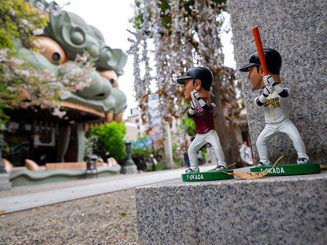 Face au lion  #osakasafari #japonsafari #discoverosaka #baseball