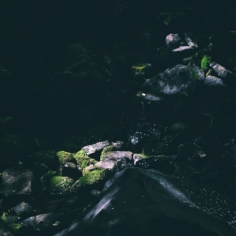 Quelques traces du passage des Sakura #osakasafari #japonsafari #discoverosaka