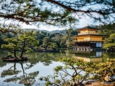 Back to classics, parce que de temps en temps il en faut !  Inimitable, le pavillon d'or était considéré comme le joyau du Japon et de Kyoto, le summum du raffinement à la japonaise.  Il a certes été incendié en 1950, mais il a été reconstruit comme à l'origine en 1955. L'histoire derrière sa destruction, criminelle, le rend encore plus légendaire qu'il ne l'était déjà !  Connaissez-vous son histoire ? . . . . . #kyotojapan #kyotogram #kyotolove #fujifilmglobal #japanesegarden #japanesetemple #kinkakuji #beautifulkyoto #ilovekyoto #visitjapanjp #visitjapanfr #discoverjapan #discoverkyoto #そうだ京都行こう #京都 #京都旅 #京都好き #日本を休もう #京都カメラ部