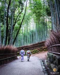 La basse saison, ça a du bon ! On sent bien qu'il y a clairement moins de monde et certains gros sites sont finalement relativement peu fréquentés, surtout en fin de journée !  Ça laisse quelques opportunités de photos assez intéressantes ^^ Vous êtes déjà venu au Japon hors saison ? (Hiver, juin, septembre) . . . . .  #kyotojapan #kyotogram #kyotolove #japanesekimono #bambooforest #beautifulkyoto #ilovekyoto #fujifilmglobal #arashiyama #visitjapanjp #discoverjapan #discoverkyoto #そうだ京都行こう #京都 #京都旅 #京都好き #日本を休もう #京都カメラ部