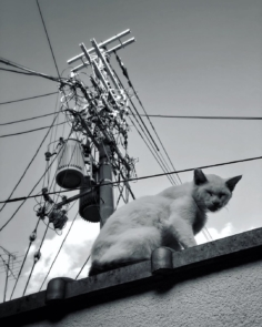 Un chat branché (pour la collection de @kansai_cats ?)