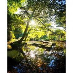 Après Shinjuku à Tokyo, un peu de nature avec le jardin du sanctuaire Oyama à Kanazawa :)