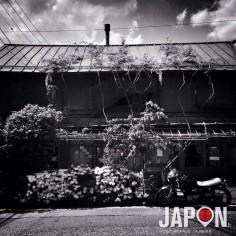 Mon client #TokyoSafari d'hier m'a inspiré cette photo à l'iPhone !