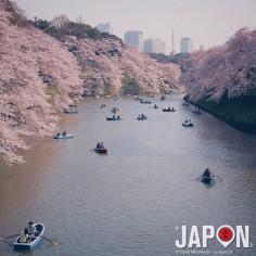 Chidorigafuchi reste pour moi un des meilleurs spot Sakura de Tokyo, loin devant Ueno !