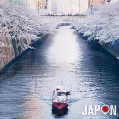 100% Sakura