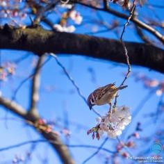 Le printemps est là ! Est-il possible de mieux le représenter ?