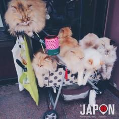 Faire ses courses au Japon, c'est carrément pas pareil ! #miaou #NekkoLand