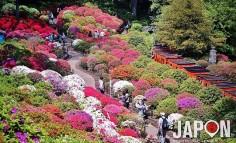 Il n'y a pas que les Sakura comme jolies fleurs à Tokyo ! Les azalées et rhododendrons font aussi le spectacle ! :D
