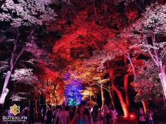 Magical Forest #japon #kyoto #kyotosafari