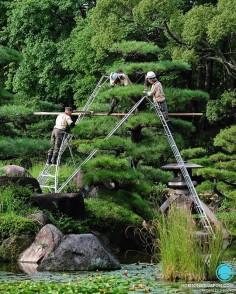 L'automne arrive, on bichonne à nouveau les pins