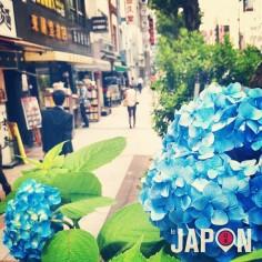 La saison des hortensias a bien commencé sur Tokyo :)