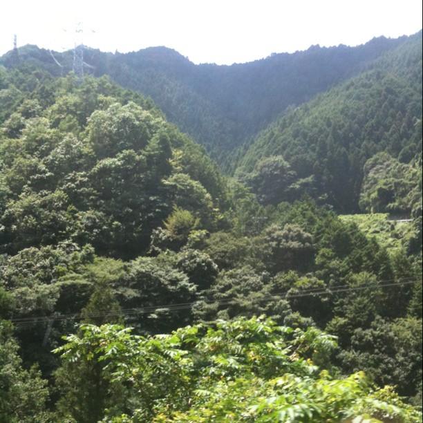 On va redescendre et continuer jusqu'à Wakayama pour prendre le bâteau !