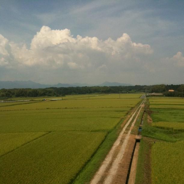 La campagne japonaise et ses rizières à perte de vue !
