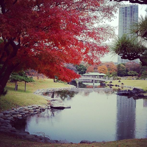 Jardin de Hamarikyu sous la pluie…