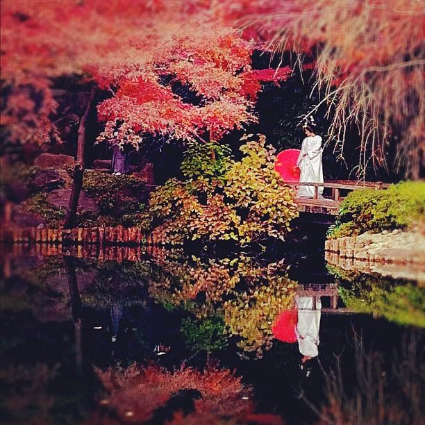 Photos de mariage en kimono, sous les érables en plein Tokyo !