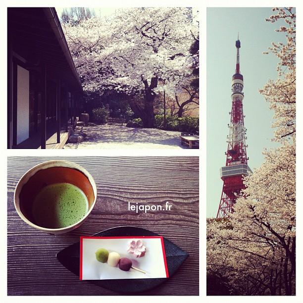 Tradition et Sakura