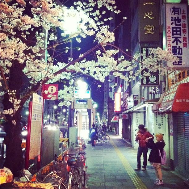 Super journée à chasser les Sakura à Tokyo !