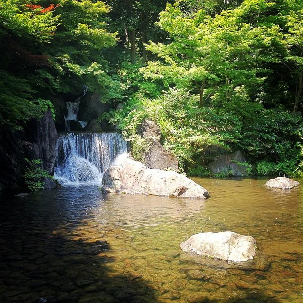 Dans le jardin du Banpaku Koen