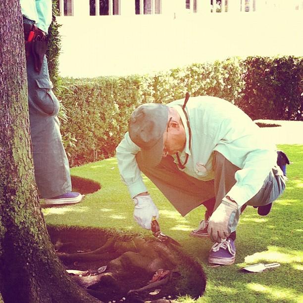 Traditionnels jardins japonais ou Disney Land Tokyo, la coupe du gazon se fait aux ciseaux !