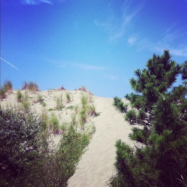 Ça sent la jolie plage derrière cette dune…