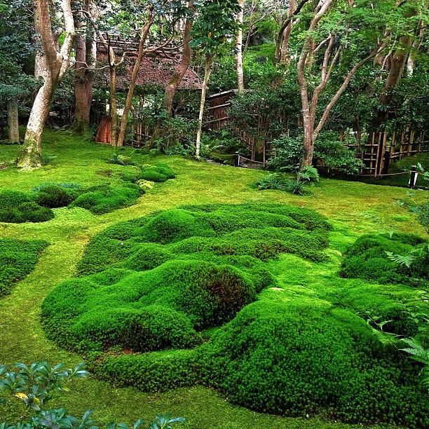 Jardin de mousse à Kyoto