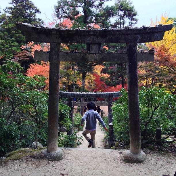L'automne à Miyajima III