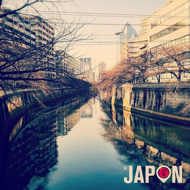 Repérage spot photo Sakura pour la grosse saison des Tokyo Safari !