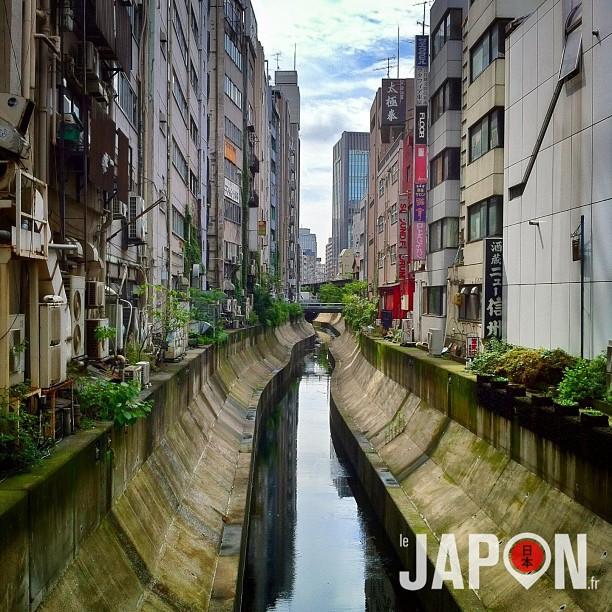Shibuya ce matin ! Let's Go pour le Tokyo Safari du jour ;)