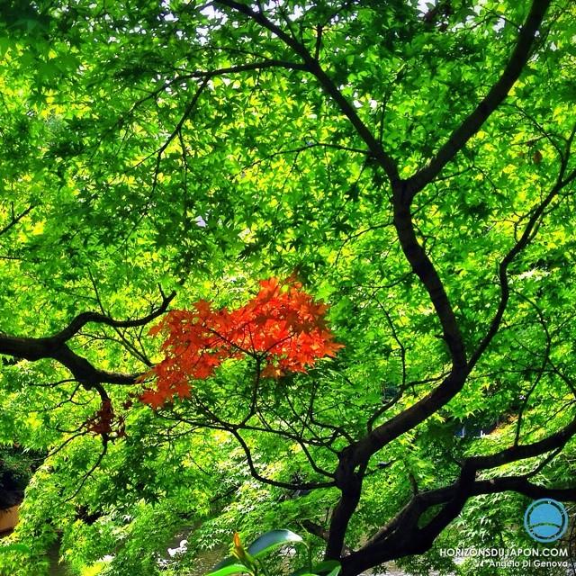 Un peu de rouge dans ce monde de vert