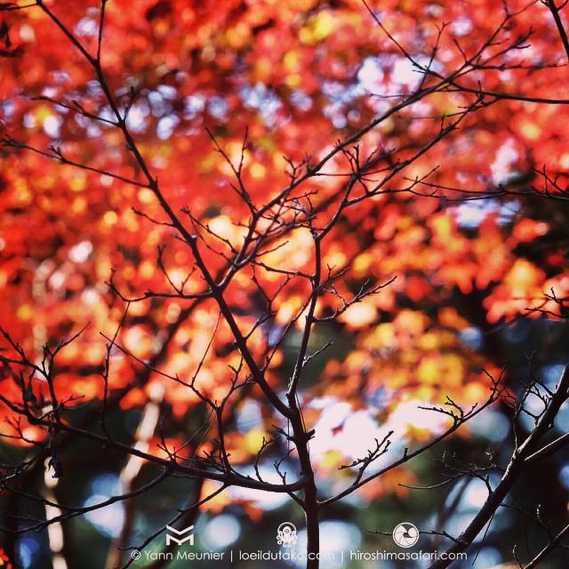 L'automne arrive doucement.. #Hiroshima #fujifilm #xt1 #xf55200 #automne #japon #japan