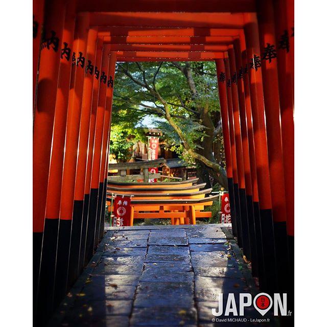 Ueno et ses sanctuaires qui révèlent leur beauté sous un certain angle de prise de vue ! #TokyoSafari