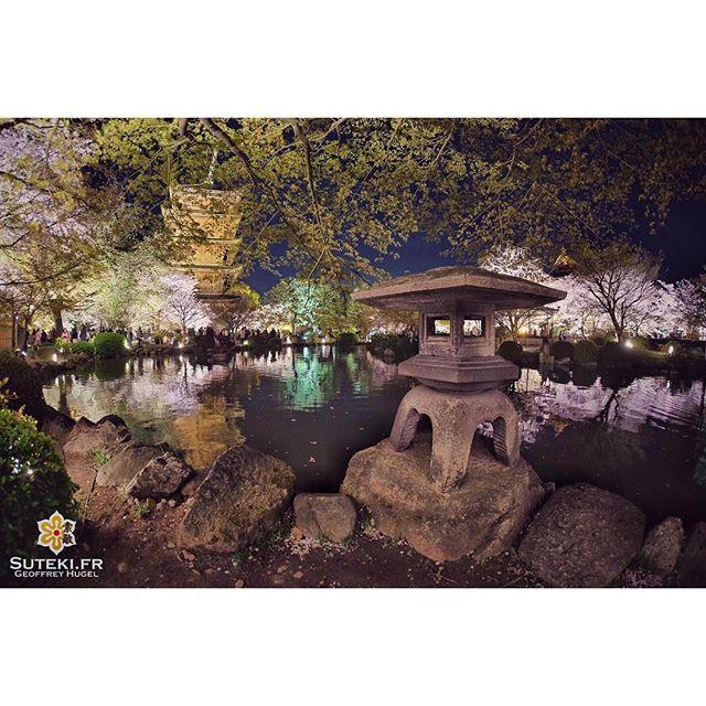 Les illuminations sont toujours des moments magiques #japon #kyoto #kyotosafari