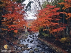 Flamboyante nature #japon