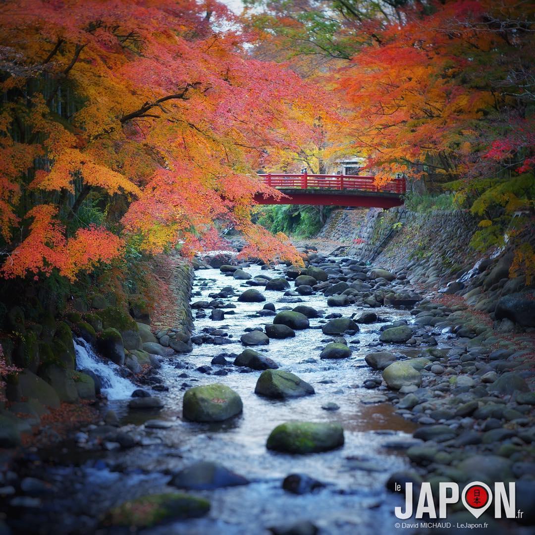 L'automne était encore bien présent à Shuzenji ce week-end !🍁🍂